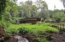 Gumantong cave Borneo Malaysia(3)