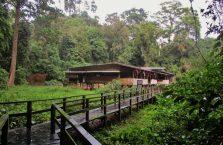 Gumantong cave Borneo Malaysia(6)