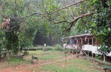 Gumantong cave Borneo Malaysia(8)