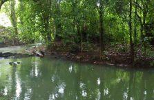 Gumantong cave Borneo Malaysia(9)