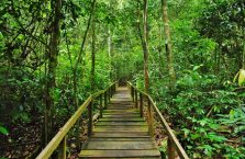 Gunung Gading Borneo (11)