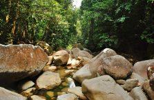Gunung Gading Borneo (4)