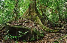 Gunung Gading Borneo (7)