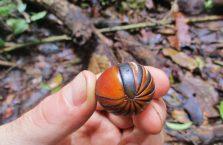 Kinabatangan Borneo (12)