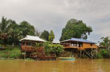Kinabatangan Borneo (15)