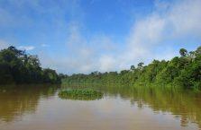 Kinabatangan Borneo (2)