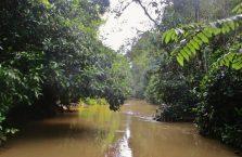 Kinabatangan Borneo (4)