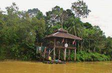 Kinabatangan Borneo (5)
