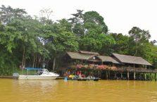 Kinabatangan Borneo (6)