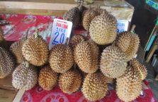 Kota Kinabalu Borneo (28)