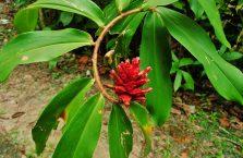 Kota Kinabalu Borneo (5)