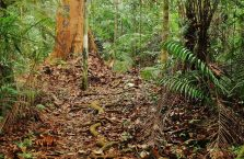 Lambir Hills Borneo Malaysia(10)
