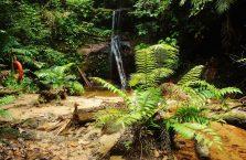 Lambir Hills Borneo Malaysia(11)