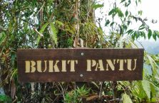 Lambir Hills Borneo Malaysia(14)
