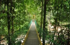 Lambir Hills Borneo Malaysia(2)