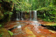 Lambir Hills Borneo Malaysia(3)