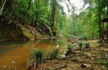 Lambir Hills Borneo Malaysia(4)