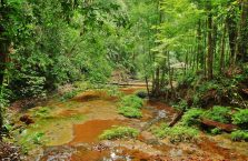 Lambir Hills Borneo Malaysia(5)