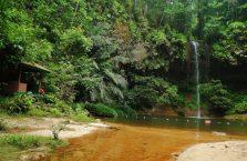 Lambir Hills Borneo Malaysia(7)