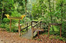 Lambir Hills Borneo Malaysia(8)