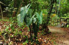 Lambir Hills Borneo Malaysia(9)