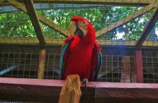 Lok Kawi Wildlife Park Borneo (12)