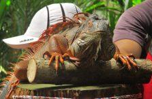 Lok Kawi Wildlife Park Borneo (13)