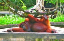 Lok Kawi Wildlife Park Borneo (14)
