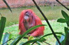 Lok Kawi Wildlife Park Borneo (18)