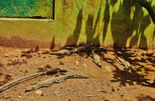 Lok Kawi Wildlife Park Borneo (31)