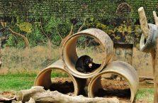 Lok Kawi Wildlife Park Borneo (5)