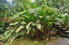 Mari-Mari village Borneo Malaysia (14)