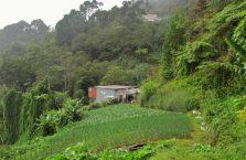 Mount Kinabalu Borneo (1)