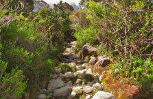 Mount Kinabalu Borneo (12)