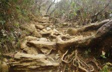 Mount Kinabalu Borneo (38)