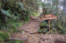 Mount Kinabalu Borneo (8)