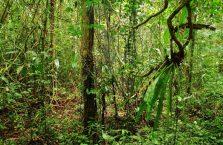 Mulu Park Borneo Malaysia (10)