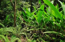 Mulu Park Borneo Malaysia (11)