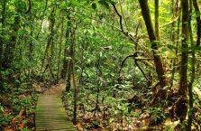 Mulu Park Borneo Malaysia (12)