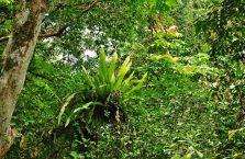 Mulu Park Borneo Malaysia (13)