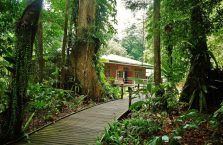 Mulu Park Borneo Malaysia (15)