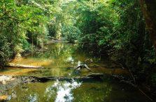 Mulu Park Borneo Malaysia (17)