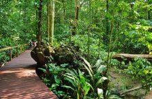 Mulu Park Borneo Malaysia (18)