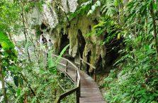 Mulu Park Borneo Malaysia (33)