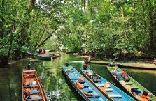 Mulu Park Borneo Malaysia (34)