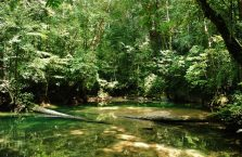 Mulu Park Borneo Malaysia (35)