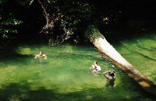 Mulu Park Borneo Malaysia (41)