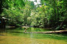Mulu Park Borneo Malaysia (43)