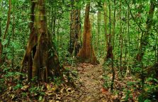 Mulu Park Borneo Malaysia (44)