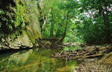 Mulu Park Borneo Malaysia (45)